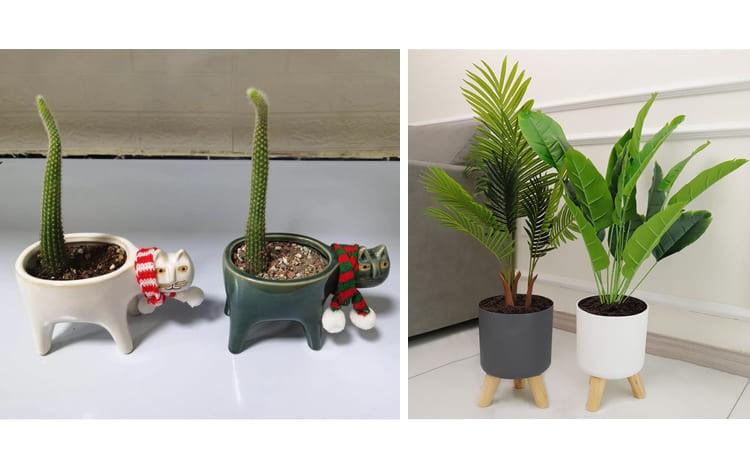 Комнатное растение в симпатичном горшке